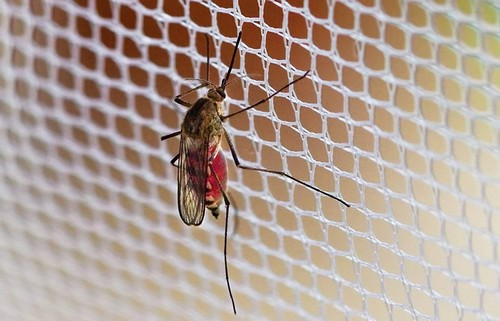 High-quality ultra-fine mesh netting for mosquitoes small
